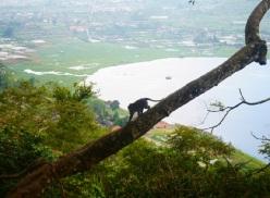 Quelques singes croisés sur la route